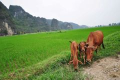 Vietnam / Wietnam - Trang An 01-04-2014