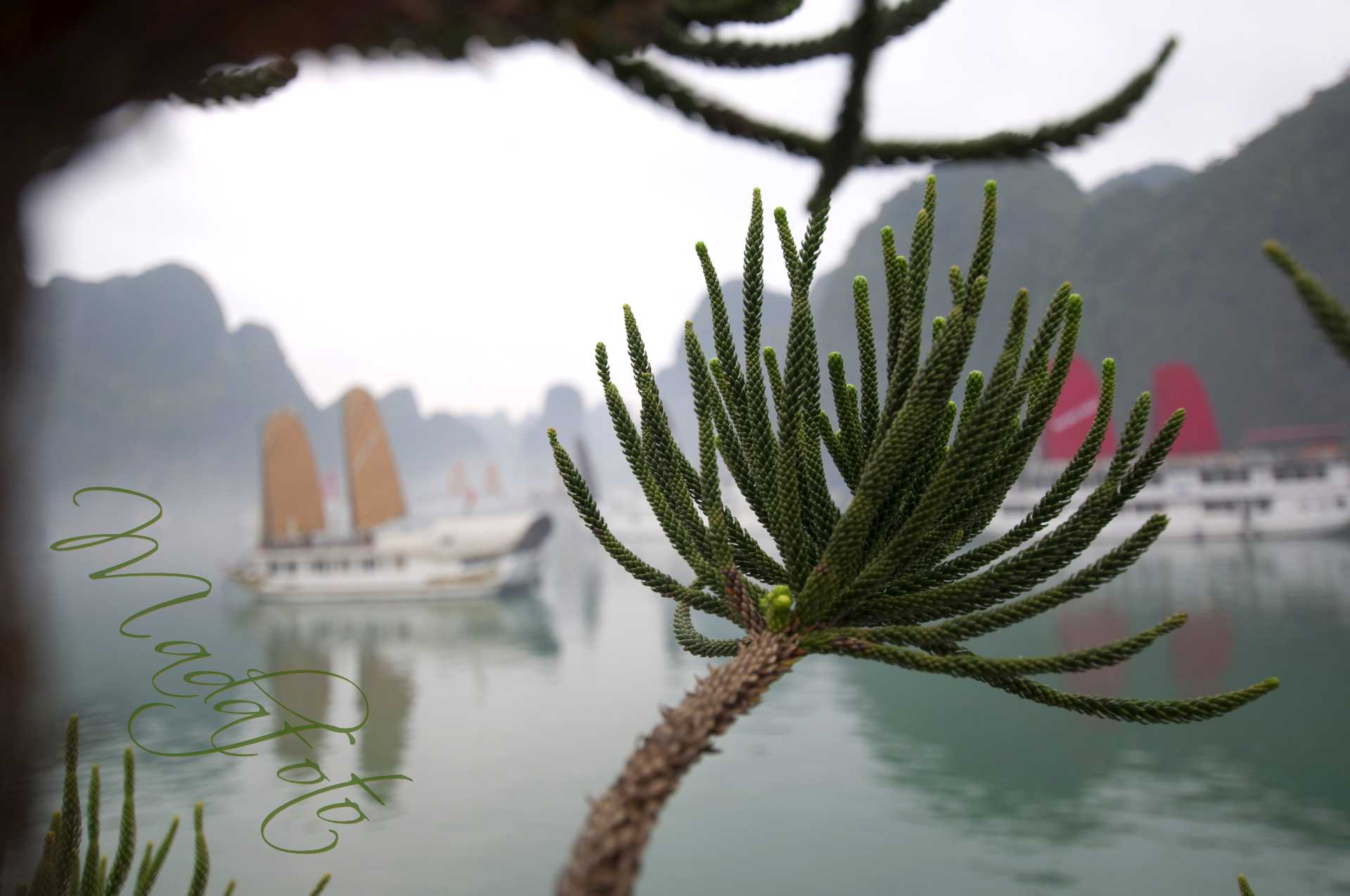 (1) Vietnam – Ha Long Bay